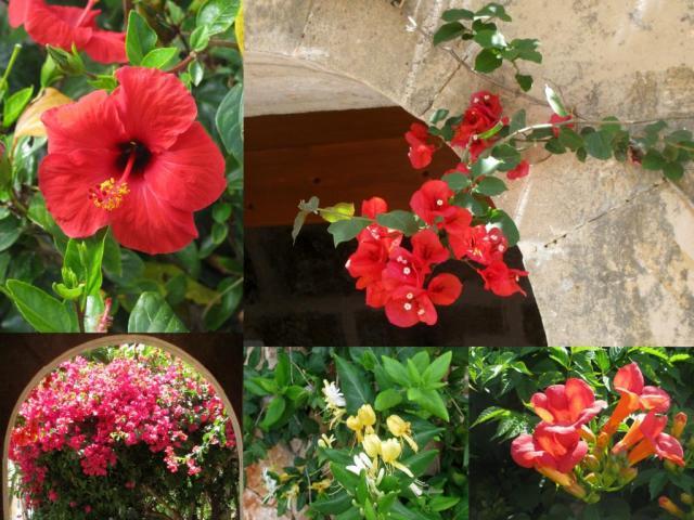 K1024_Suchergebnisse für Mallorcafarbe